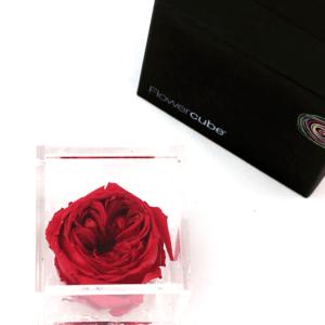 Flower Cube Inglese