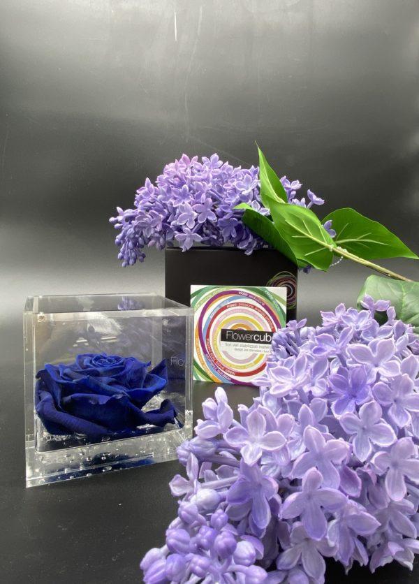 Flower Cube Blu